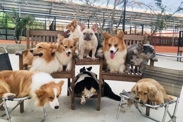 Chia sẻ kinh nghiệm đi Đà Lạt một mình 3 ngày 2 đêm chỉ với 1 triệu 2 - Nông trại cún puppy farm